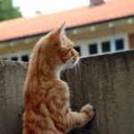 cat-1059803_960_720